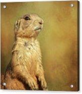 Wyoming Prairie Dog Acrylic Print