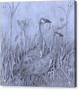 Wyoming Sandhill Cranes Acrylic Print