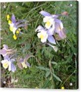 Wyoming Spring  Acrylic Print