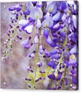 Wysteria Acrylic Print