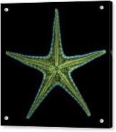 X-ray Of Starfish Acrylic Print