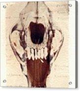 X Ray Terrestrial Acrylic Print