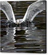 X Wing Acrylic Print