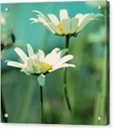 Xposed - S07b Acrylic Print by Variance Collections