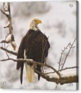 Yakama Canyon Eagle Acrylic Print