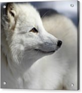 Yana The Fox Acrylic Print