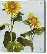 Yana's Sunflowers Acrylic Print