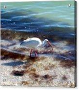 Yay Seaweed Acrylic Print