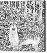 Yearling Acrylic Print