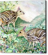 Yello-striped Mouse Deer Acrylic Print