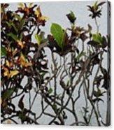 Yellogreen  Acrylic Print
