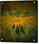 Yellow 2 Acrylic Print