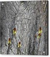 Yellow Aloe Flowers And Tree Acrylic Print