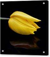 Yellow And Black Acrylic Print