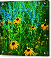 Yellow And Blue Acrylic Print