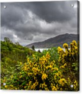 Yellow Flowers And Grey Clouds, Stormy Weather Over Sea In Scotland. Acrylic Print