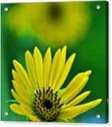 Yellow And Green 3 Acrylic Print