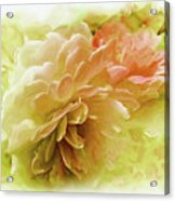 Yellow And Pink Roses Acrylic Print