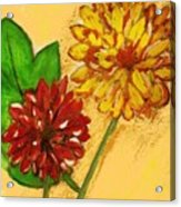 Yellow And Red Chrysanthemums Acrylic Print