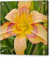 Yellow And Red Lily Acrylic Print