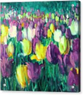 Yellow And Violet Tulips Acrylic Print