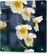 Yellow And White Cascading Flowers Acrylic Print