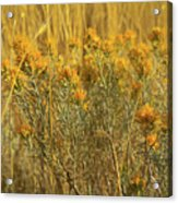 Yellow Autumn Blooming Acrylic Print
