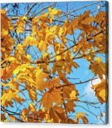 Yellow Autumn Leaves 2 Acrylic Print