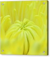 Yellow Banana Flower Acrylic Print