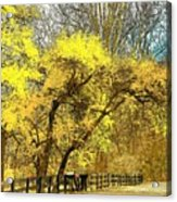 Yellow Bend Acrylic Print by Joyce Kimble Smith