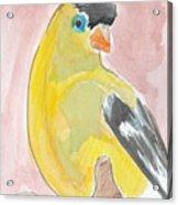 Yellow Bird 56 Acrylic Print