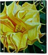 Yellow Blast Acrylic Print