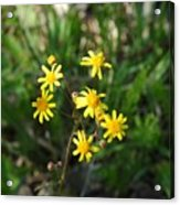 Yellow Bouquet On The Trail Acrylic Print