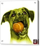 Yellow Boxer Mix Dog Art - 8173 - Wb Acrylic Print