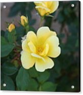 Yellow Acrylic Print by Bret Worrell
