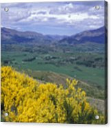 Yellow Broom Over Pasture In Dalefield Acrylic Print
