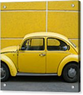 Yellow Bug Acrylic Print