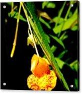 Yellow Burst Acrylic Print