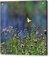 Yellow Butterfly Flyaway Acrylic Print