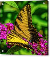 Yellow Butterfly In The Garden Acrylic Print