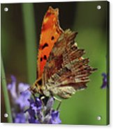 Yellow Butterfly No.2 Acrylic Print