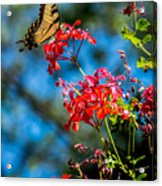 Yellow Butterfly On Red Flowers Acrylic Print