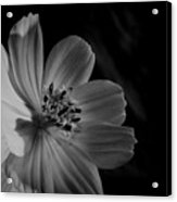 Yellow-bw-1 Acrylic Print by Fabio Giannini