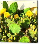 Yellow Cactus Blossoms 594 Acrylic Print