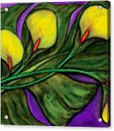 Yellow Calalilies Acrylic Print