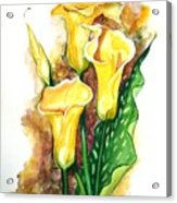 Yellow Callas Acrylic Print