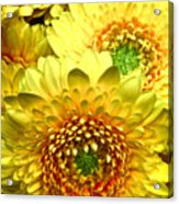 Yellow Cluster Acrylic Print