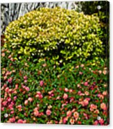 Yellow Coleus And Lantana At Pilgrim Place In Claremont-california Acrylic Print