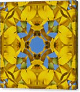 Yellow Coneflower Kaleidoscope Acrylic Print