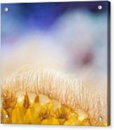 Yellow Coral Reef Macro Acrylic Print